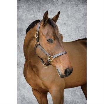 Dover Saddlery Triple-Stitched Everyday Halter