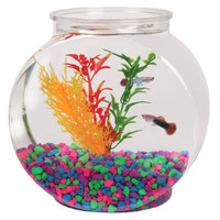 Grreat Choice® .5 Gallon Fish Bowl | Aquariums | PetSmart