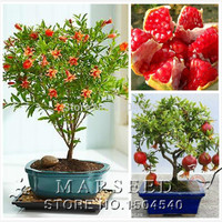 20pcs/bag Pomegranate bonsai seeds home plant Delicious fruit seeds