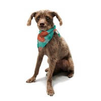 "Anneline Sophia ""Summer Rose Orange"" Teal Green Pet Bandana"