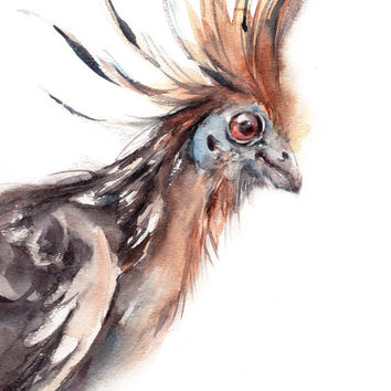 Hoatzin Bird Watercolor Painting Art Print, Watercolour Bird, Wall Art, Bird Illustration, Bird Art