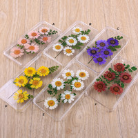 Natural Pressed flowers iPhone case Samsung Galaxy case 001