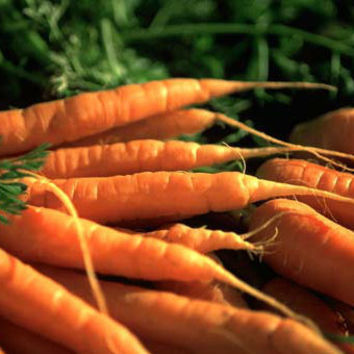 Organic Vegetable Seeds Carrot Seed Spring Winter by WinsomeGreen
