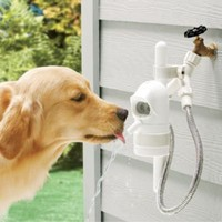 Automatic Pet Fountain - Frontgate