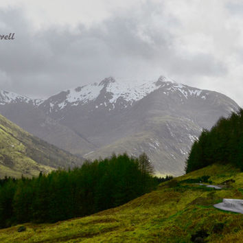 Mountain Photography Scotland Art, Landscape Print, Large Travel Photography, Black, White, Evergreen Tree, Nature Wall Art - Into The Wild