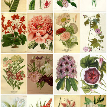 Vintage Botanical Flower Images  Collage Sheet