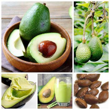 10 Pcs  Rare Exotic Avocado Seeds Very Delicious Butyrospermum Parkii Fruit Seed For Home Garden Plant Easy To Grow