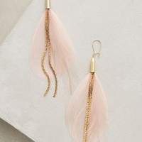 Serefina Rose Plume Drops in Rose Size: One Size Earrings