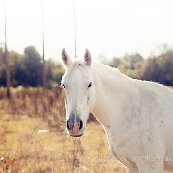 horse photography sunshine white decor farm photography decor rustic wall art nature photograph Looking at You 8x10