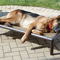 Raised Outdoor Dog Bed / Raised Cooling Bed -- Orvis
