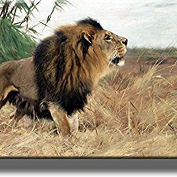 Barbary African Lion Picture by Kuhnert on Stretched Canvas, Wall Art Decor, Ready to Hang!