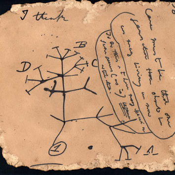 Darwin's Unpublished Tree of Life Black Text- Hand Drawn Vintage Science Art Poster