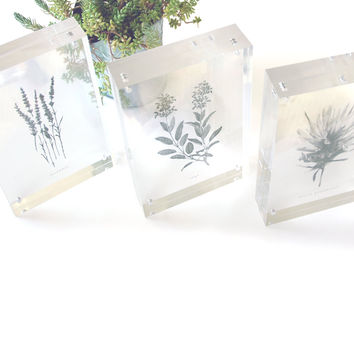 Floating Nature Print - See-Through Minimalist Herb, Fruit, Flower, or Shell Illustration - Transparent Botanical Art in Clear Acrylic Frame