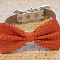 Orange Dog Bow Tie with high quality collar, Wedding dog accessories
