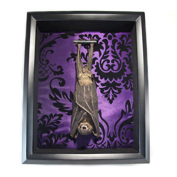 Large Fruit Bat Taxidermy Shadow Boxes Gothic Violet Taffeta Oddities and Curiosities