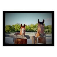 Horses Photo Poster