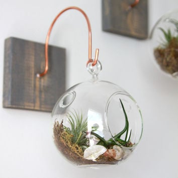 Wood and Copper Mount with Terrarium // Unique Wall Decor // Handmade