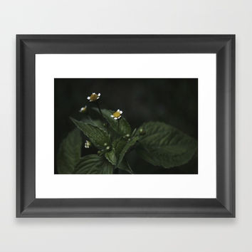 Botanical Still Life Chamomile Framed Art Print by ARTbyJWP