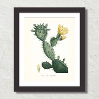 French Cactus Series No. 4 Botanical Canvas Art Print