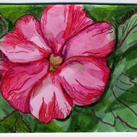 Pink Balsam Flower ACEO