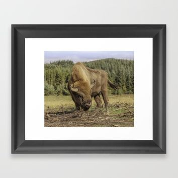 Bison bull Framed Art Print by Peaky40