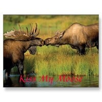 kiss my moose, Kiss My Moose Post Cards from Zazzle.com