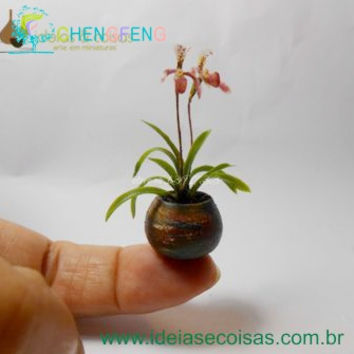 2016 Hot Sales! 100pcs Seeds Mini Bonsai Orchid Seeds Indoor Home Miniature Flower Pot Garden Plants Four Seasons Free Shipping