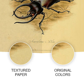 Vintage illustration: Scarab beetle, An Epitome of the Natural History of the Insects of India - DIGITAL INSTANT DOWNLOAD