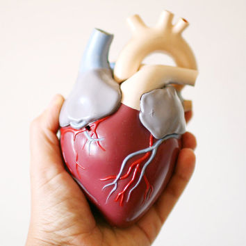 Vintage 1959 Anatomical Model Heart MARRY ME by VeriteVintage