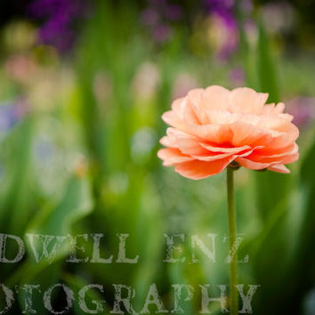 Alone 5x7 Orange Poppy Fine Art Print Flower Photography Floral Home Decor Wall Art Nature Photography