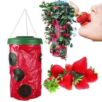 Strawberry Planter(1 Set)