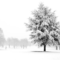 Tree Standing In A Field Covered In Snow Photograph by Fizzy Image - Tree Standing In A Field Covered In Snow Fine Art Prints and Posters for Sale
