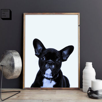 french bulldog print, french bulldog poster, dog print, frenchie print, dog wall art, black and white photography, animal print, bulldog