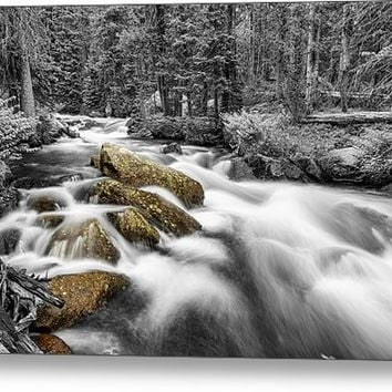 Rocky Mountain National Forest Stream Bwsc Metal Print