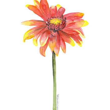 Indian Blanket Wildflower Watercolor