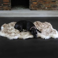 Animals Matter® Ortho Shag Bed Rug