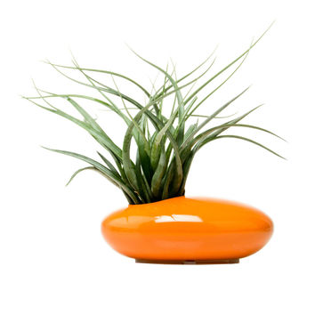 Mod Saucer Planter in Orange