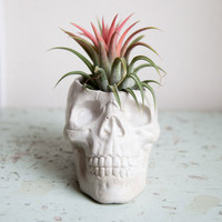 Plant Brains Skull Pot