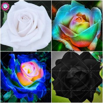 100pcs Black&White Rose seeds beautiful rare flower seeds perennial indoor or outdoor plant pot DIY House garden flowers seeds