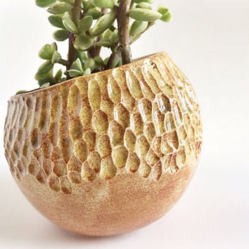 Small Succulent Planter - Brown Housewares - Carved Planter - Ceramics and Pottery - Pottery Plant Pot