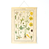 BOTANICAL WALL HANGING, Rare German Original, Pull Down School Chart, from Germany, Field or Meadow Flowers, Antique Wall Hanging