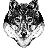 Wolf Head Art Print by Iain Macarthur