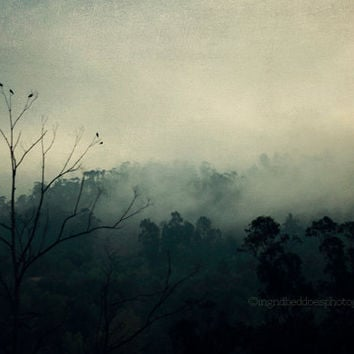 Mountain photography -  landscape photography - mist - bird photo - Portugal - moody nature photo -  fine art print -  wall art - home decor