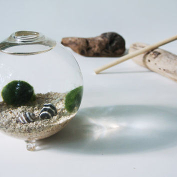 Green Bee's Aqua Terrarium  - Marimo Ball , Japanese Moss Ball, Living Home Decor, Gift , Plant,  Sand, Sea Shells, Glass Orb