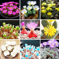 22 Kinds Mixed 100 seeds Succulent seeds Lithops Pseudotruncatella Bonsai plants Seeds for home & garden,#J4V980