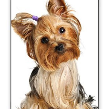 Cute Adorable Yorkshire Terrier Yorkie Dog Apple iPhone 5C Quality Hard Snap On Case for iPhone 5c/5C - AT&T Sprint Verizon - White Case