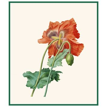 Red Poppy Flower Inspired by Pierre-Joseph Redoute Counted Cross Stitch Pattern