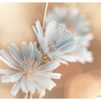 Flower photography wildflower photograph pastel blue beige bathroom art botanical wall art feminine decor shabby chic home decor photo print