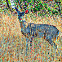 Abstract White-Tail Deer Wildlife Arizona Abstract Art Print,Photography, Wall Art Decor, Southwest Art, Arizona Wildlife Art