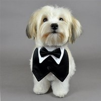 Black Satin Formal Vest & Matching Bowtie - Apparel - Shirt Collars & Ties Posh Puppy Boutique